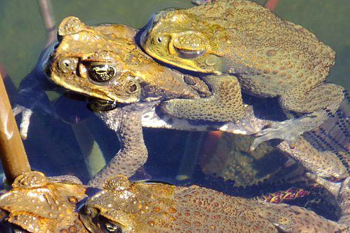 Baby, Mommy, Frogs
