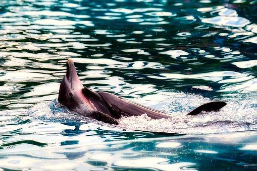Dolphin, Porpoise, Sea, Ocean, Mother, Child, Riding