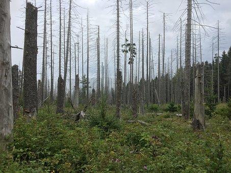 Boulder, Hartz, Hiking, Dead Trees, Grey, Dead Tree