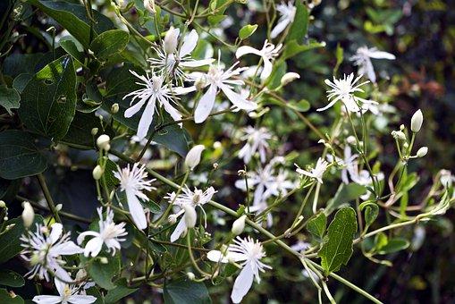 Flowers, Flower, White Flower, Plants, Flower Gardens