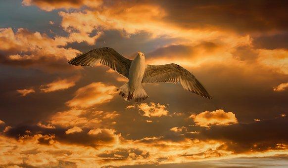 Gull, Bird, Fly, Clouds, Banner, Header, Orange, Sunset