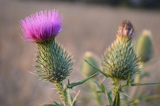 Meadow, Village, Field, Nature, Landscape, Poland