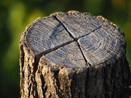 Log, Annual Rings, Tree, Wood, Nature, Structure, Tribe