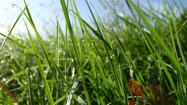 Grass, Pasture, Dew, Meadow, Countryside