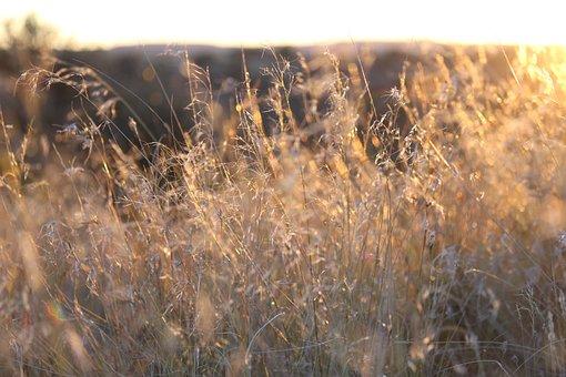 Golden, Grass, Nature, Season, Yellow, Meadow, Field