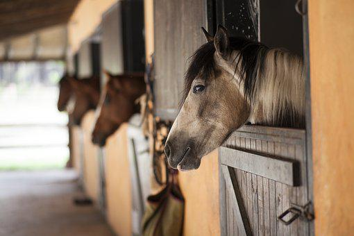 Horse, Barn, The Horses Are, Stallion, Animal, Cute