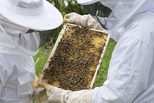 Beekeeper, Bees, Beehive, Hive, Bee Breeding