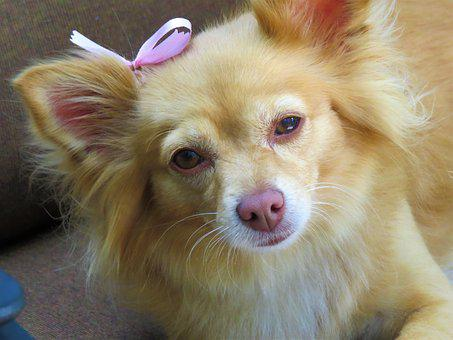 Dog, Cute, Up Close, Brown, Pet