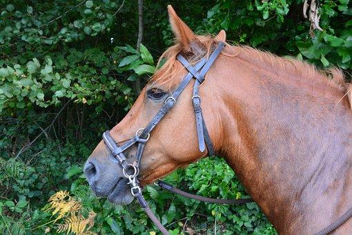 Horse, Head, Net, Side Pull, Profile, Eye, Equine