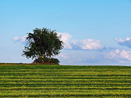 Tree, Loneliness, Field, Meadow, Landscape, Nature