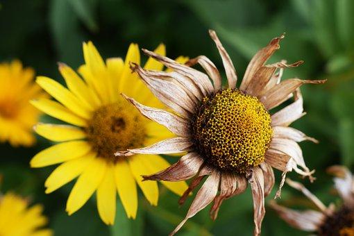 Summer, Flower, Meadow, Field, Holidays, Garden, Nature