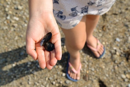 Girl, Beach, Shells, Walk, Holiday, Hand, Sand, Sea