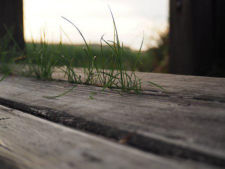 Bank, Grass, Wood, Nature, Rest, Sit, Bench, Seat
