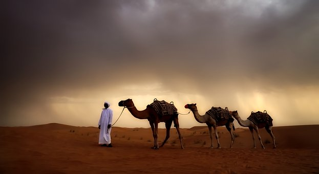 Desert, Camels, Animals, Travel, Landscape, Panorama