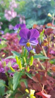Flower, Purple, Purple Flower, Nature, Bloom, Plant