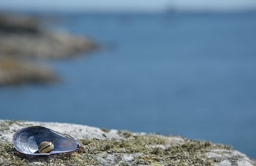 Background, Sea Shells, Short, Greeting, Thanks, Hi