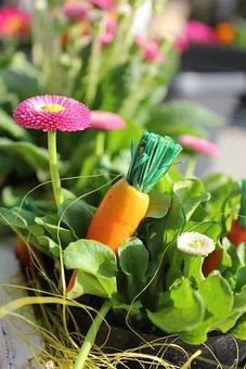 Easter, Carrot, Flower, Spring, Easter Bunny