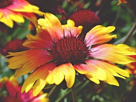 Summer Flower, Bloom, Summer, Nature, Plant, Flowers