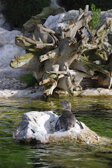 Tiergarten, Schönbrunn, Penguin, Log, Zoo, Bird