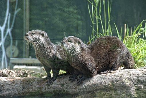 Zoo, Tiergarten Schönbrunn, Wildlife Photography, Otter
