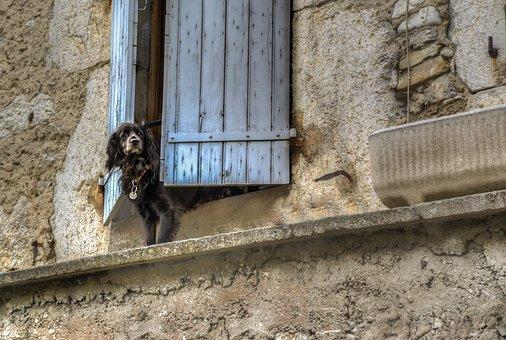 Dog, Window, Waiting, Animal, Cute, Pet, Happy, Looking