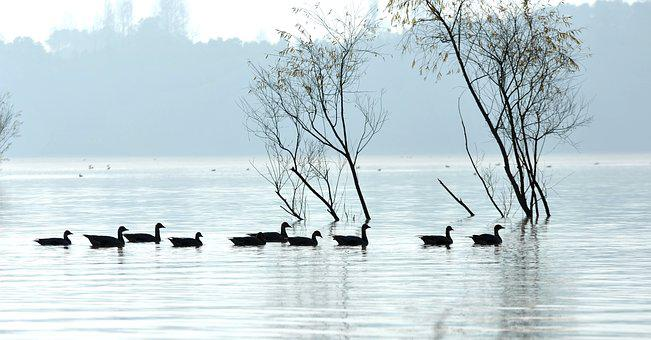 The Water, The Morning Mist, Water Birds