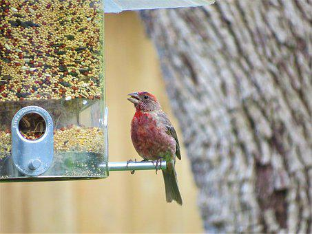 Bird, Colorful, Wildlife, Bird Feeder