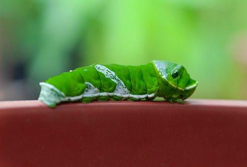 Caterpillar, Green, Animal, Nature, Insect, Wildlife