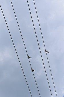 Bird, Sky, Cloud, Wiring, Roost