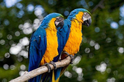 Ara, Parrot, Colorful, Bird, Beak, Color, Animal