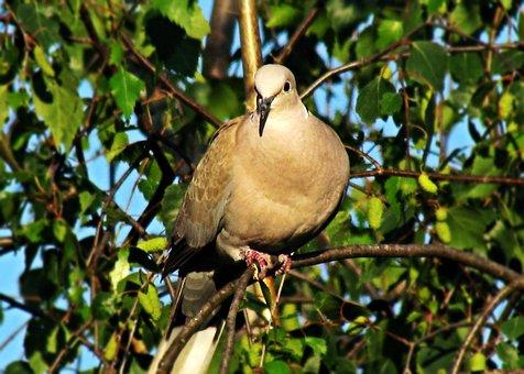 Dove, Bird, Nature, Pen, Pigeons, Park, Spring