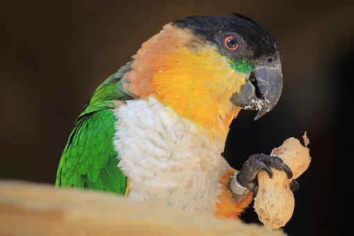 Birds, Bird, Parrot, Fauna, Animal, Animals, Nature