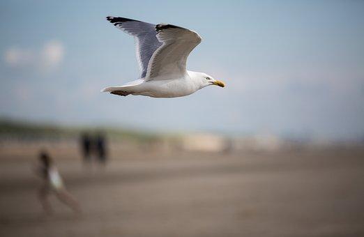 Seagull, Bird, Birds, Water Bird, Seevogel, Close