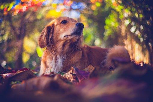 Pet, Dog, Puppy, Canine, Mutt, Animal, Shih Tzu, Bug