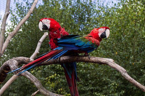 Ara, Parrot, Colorful, Bird, Beak, Color, Animal