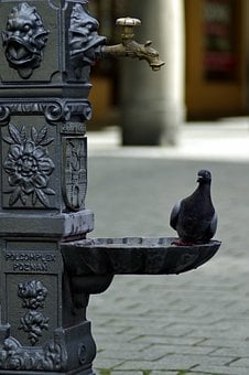 Dove, Drinker, Water, Street, Heat, Desire, Drink, Bird