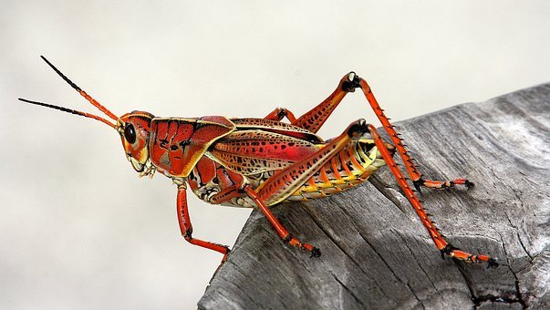 Usa, Florida, Everglades, Miami