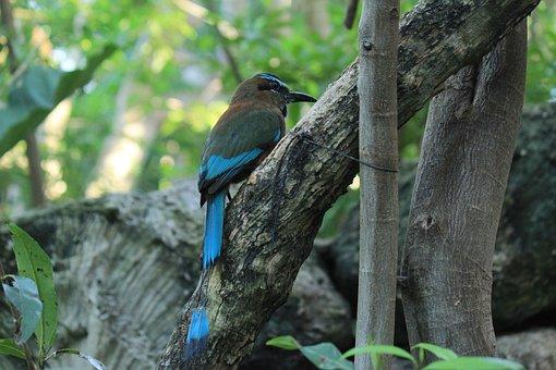 Toh, Ave, Bird, Fauna, Nature, Animal, Animals, Birds