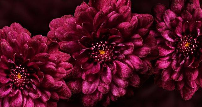 Flower, Purple, Blossom, Purple Flowers, Nature, Floral