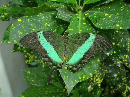 Butterfly, Green, Nature, Insect, Plant, Garden, Leaf
