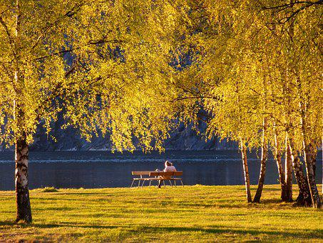 Park, Trees, Sunset, Bench, Relax, Lake, Leaves, Yellow