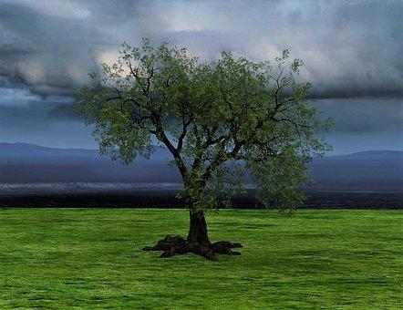 Tree, Nature, Clouds, Rush, Landscape, Log, Leaves, Sky