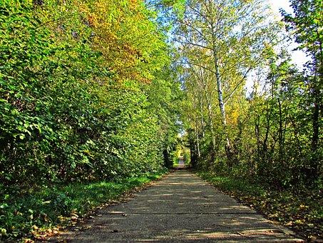 Spacer, Way, Birch, Alley, Forest, Landscape, Tree