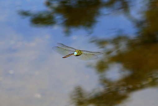 Natural, Landscape, Pond, Water, Insect, Dragonfly