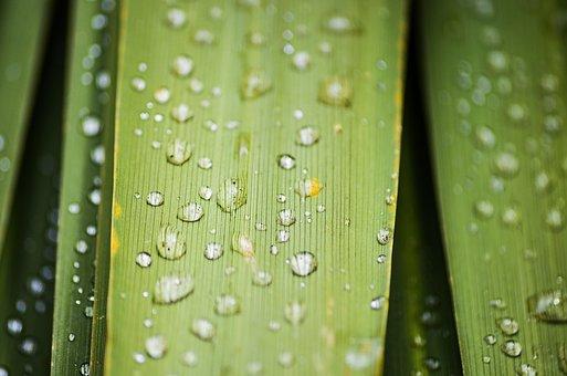 Leaf, Water, Macro
