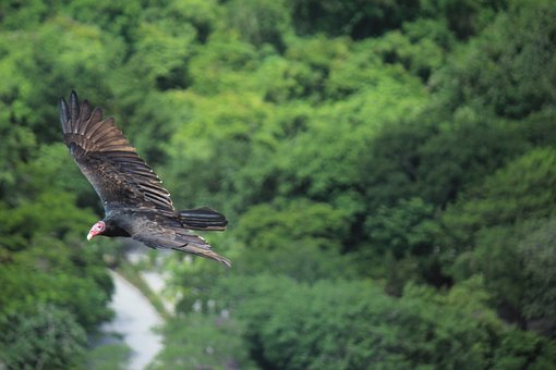 Xcaret, Cancun, Mexico, Holiday, Beauty, Bird