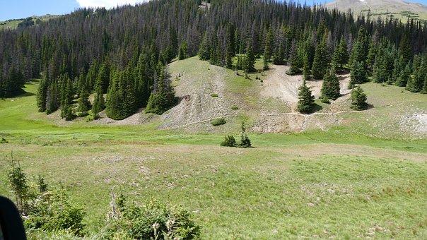 Colorado, Grove, Trees, Scene, Scenery, Tree, Mountains