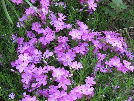 Flowers, Purple, Purple Flowers, Floral, Natural
