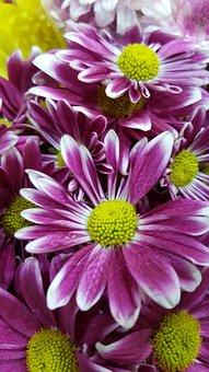 Purple, Flower, Nature, Purple Flowers, Purple Flower