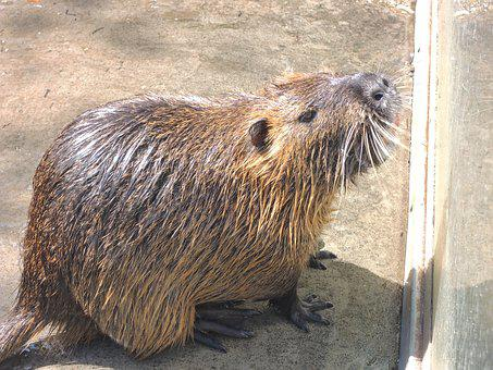 Otter, Animal, River, Water, Wet, Zoo